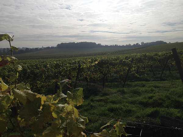 Denbies Wine Estate, Surrey, England - Views across the estates in the sun
