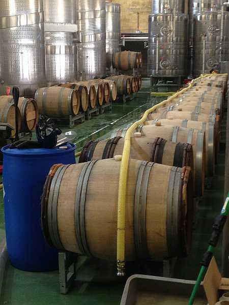 Denbies Wine Estate, Surrey, England - Wine processing