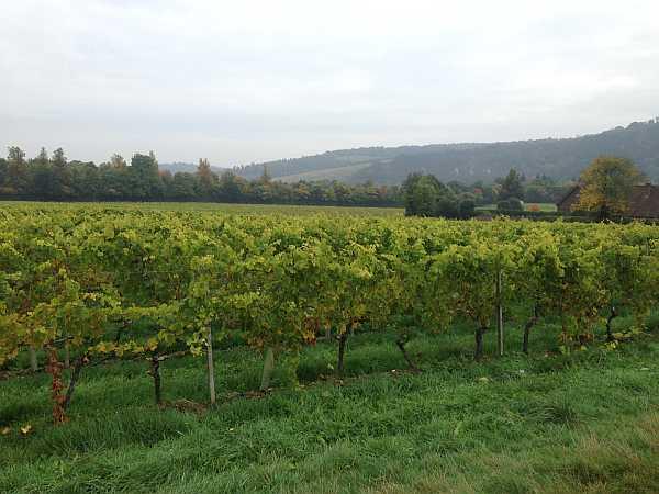 Denbies Wine Estate, Surrey, England