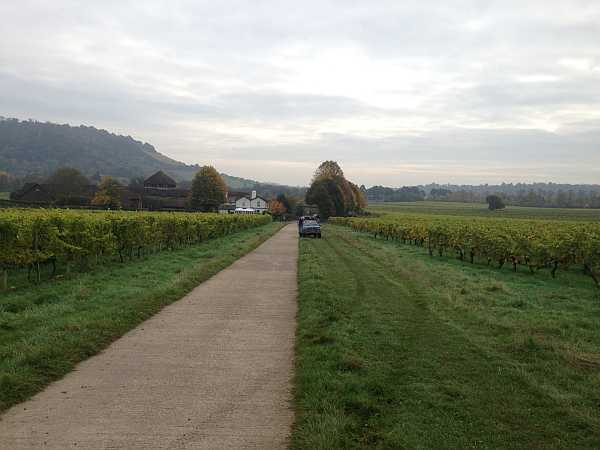 Denbies Wine Estate, Surrey, England - Grape Pickers Going to Work