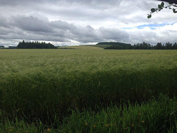 Cranshaws Castle, luxurious Scottish getaway - Fields of Barley