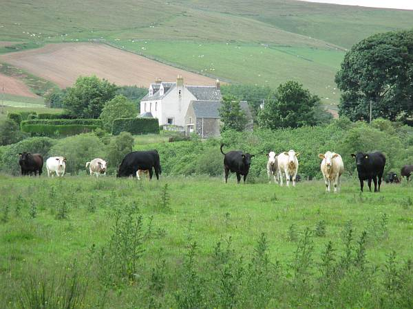 Cranshaws Castle, luxurious Scottish getaway - Saying hello to the locals... of course the cows....