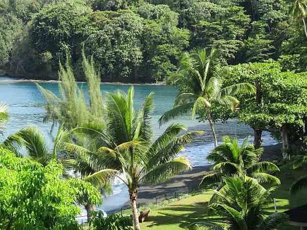 Tahiti flora