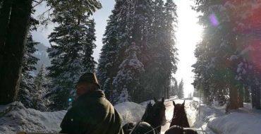 HOTEL Zürserhof, Zurs, ski luxuries from Dirndls to ski school - Horse sledge ride from Lech to Zug