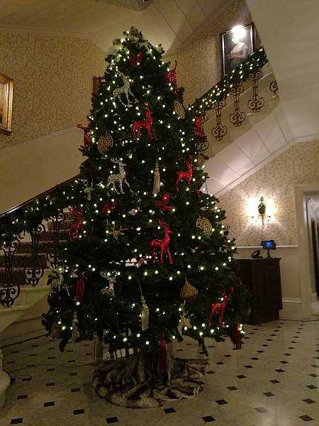 The Petersham Restaurant, Richmond offers a slice calm & seclusion - Christmas Tree